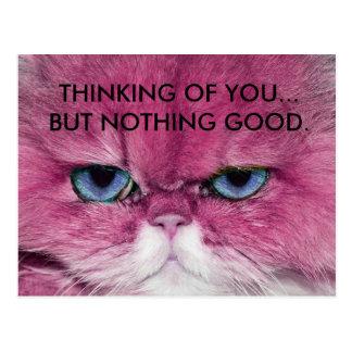CAT UNFRIENDLY NO FRIENDS FUNNY PINK CAT EYE STARE POSTCARD