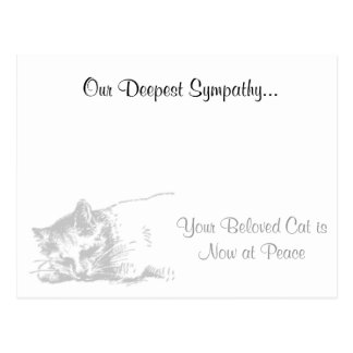 Cat Veterinarian Sympathy Postcard