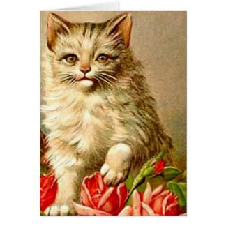 Cat Vintage Illustration Any Occasion Blank Cards