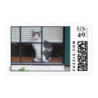 Cat Waiting Postage Stamps