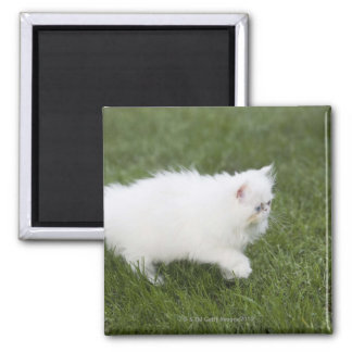 Cat walking in lawn 2 inch square magnet
