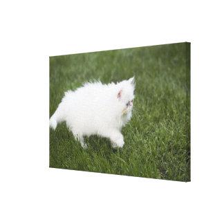 Cat walking in lawn canvas print