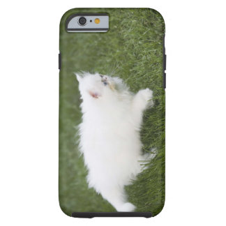Cat walking in lawn tough iPhone 6 case