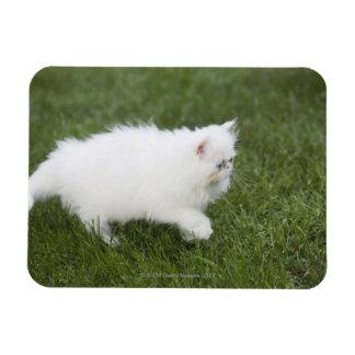 Cat walking in lawn rectangular photo magnet