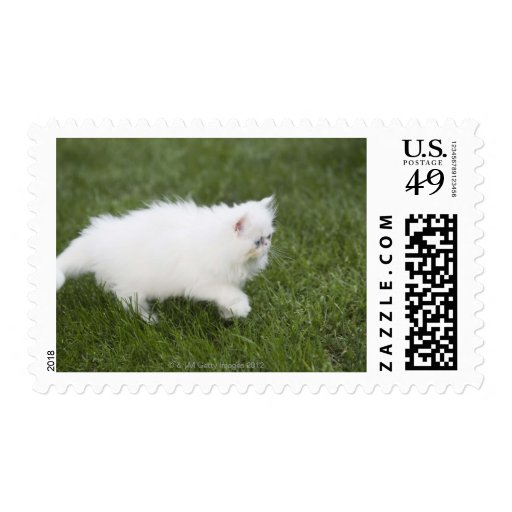 Cat walking in lawn stamp