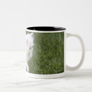 Cat walking in lawn Two-Tone coffee mug