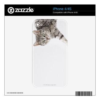 Cat walking iPhone 4 skins