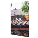 Cat walking on roof of shed canvas print