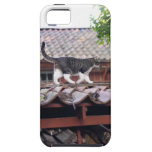 Cat walking on roof of shed iPhone 5 covers