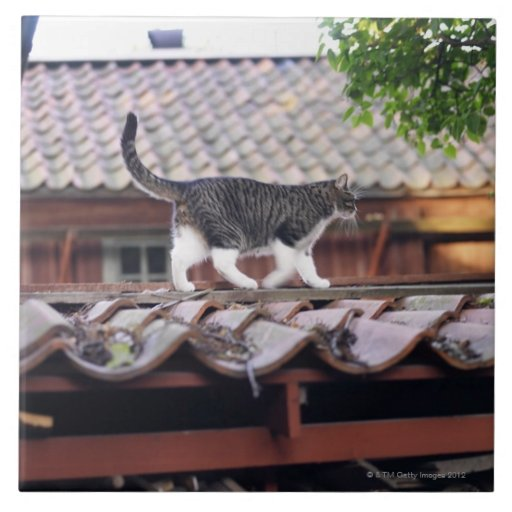 Cat walking on roof of shed large square tile