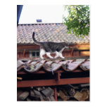 Cat walking on roof of shed postcard