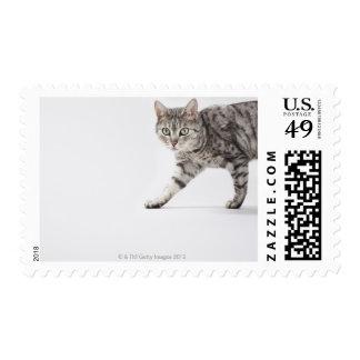 Cat walking postage stamp