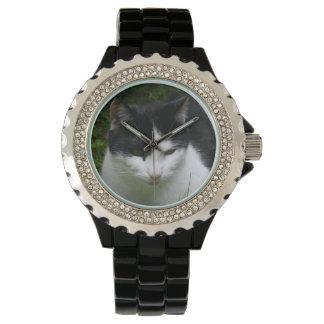 Cat Watch