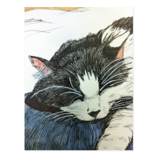 Cat water color and inked drawng postcard