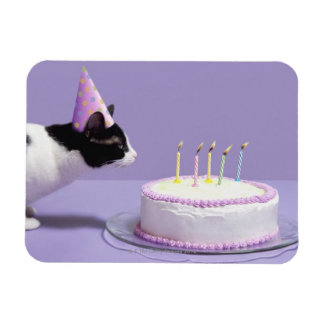 Cat wearing birthday hat blowing out candles magnet
