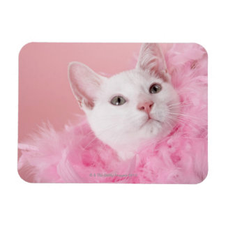 Cat wearing feather boa magnet