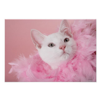 Cat wearing feather boa poster