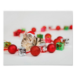 Cat wearing red Santa hat Christmas Poster