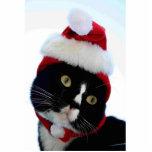 Cat wearing santa hat photograph, BW kitty Photo Cutout