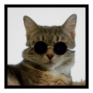 Cat Wearing Sunglasses Poster