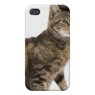 Cat wearing top hat case for iPhone 4