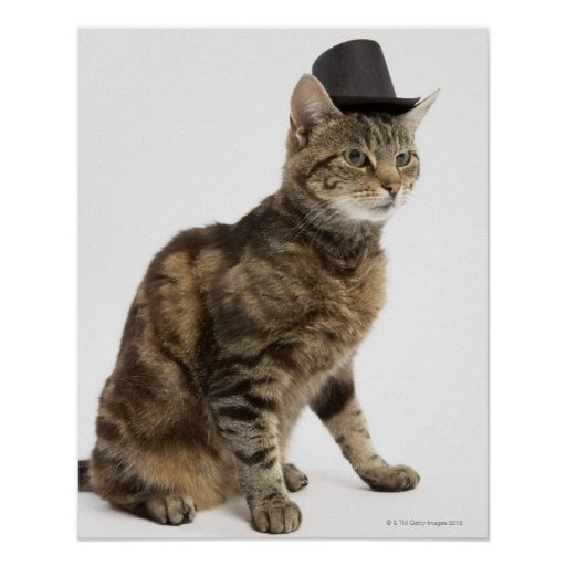 Cat wearing top hat poster