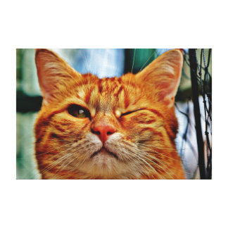 Cat Wink Canvas Print