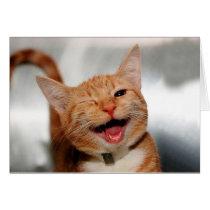 Cat winking - orange cat - funny cats - cat smile