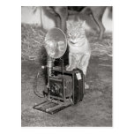 Cat with a Camera, 1936 Postcard