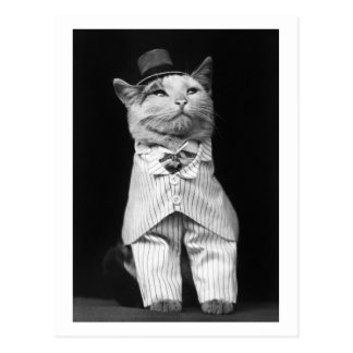 Cat With a Hat, 1906 Postcard