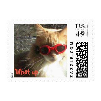 Cat with Attitude Postage