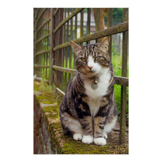 Cat with Bell Print