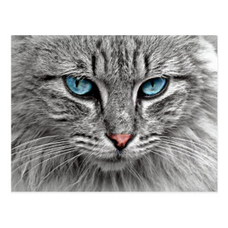 Cat with Blue Eyes Pink Nose and Gray Fur Postcard