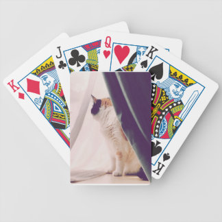 Cat with curtains bicycle playing cards