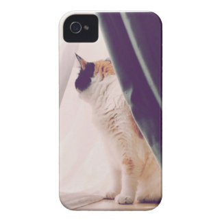 Cat with curtains iPhone 4 Case-Mate case