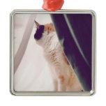 Cat with curtains metal ornament