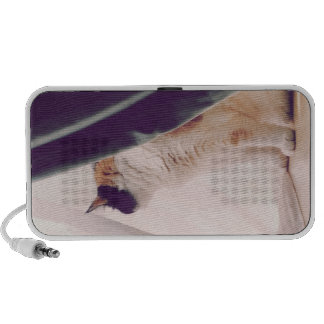 Cat with curtains portable speaker