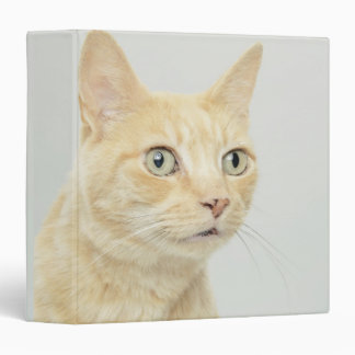 Cat with eyes open wide 3 ring binder