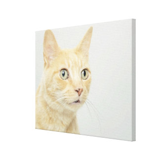 Cat with eyes open wide canvas print