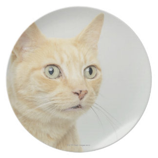 Cat with eyes open wide, close-up melamine plate