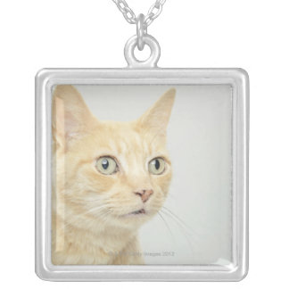 Cat with eyes open wide, close-up silver plated necklace