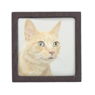 Cat with eyes open wide keepsake box
