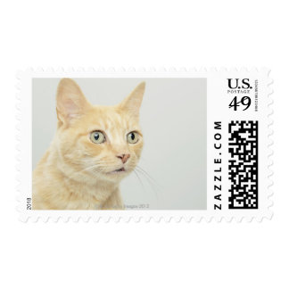 Cat with eyes open wide postage