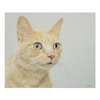 Cat with eyes open wide poster