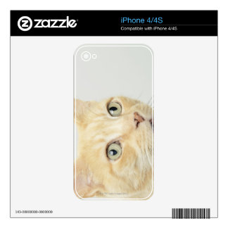 Cat with eyes open wide skin for the iPhone 4S