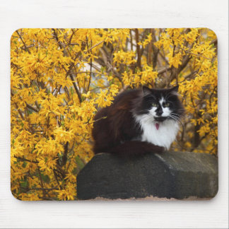 Cat With Forsythia Flowers Mouse Pad