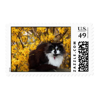 Cat with Forsythia Flowers Postage