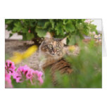 Cat with Geranium Card