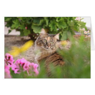 Cat with Geranium Card