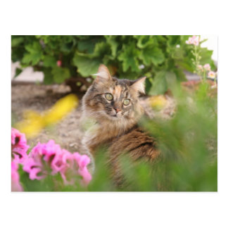 Cat with Geranium Postcard